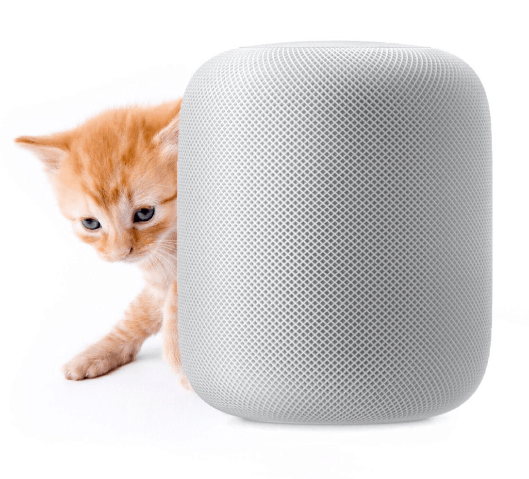 protector home security. a cat next to homepod protector home security