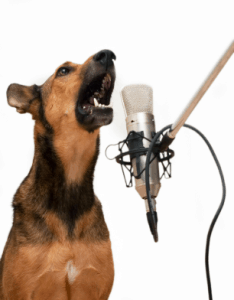 Recording a dog's barking for an alarm
