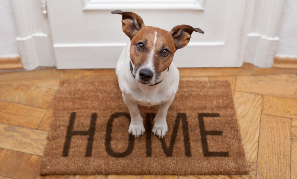 pet alert securing a home with pets home security