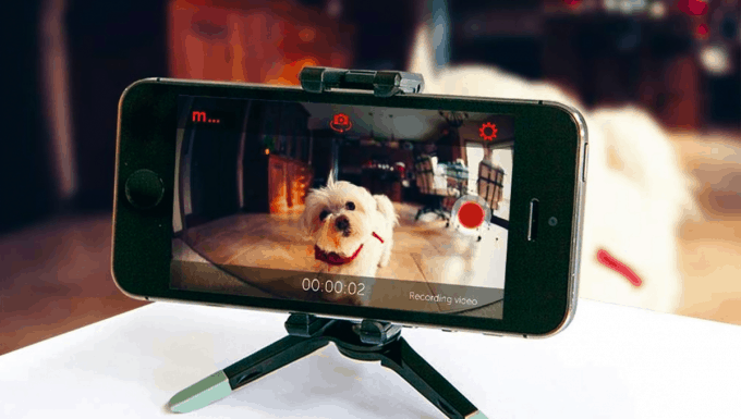 Smartphone home security camera watching your dog
